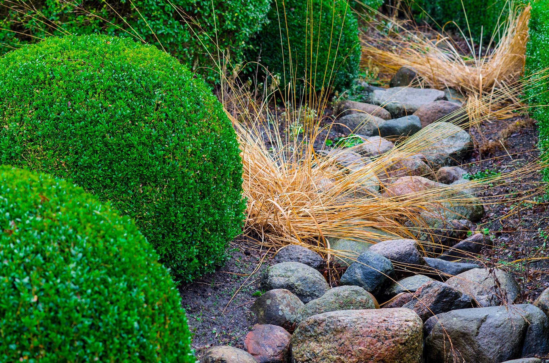 shrubs and grasses growing in stones