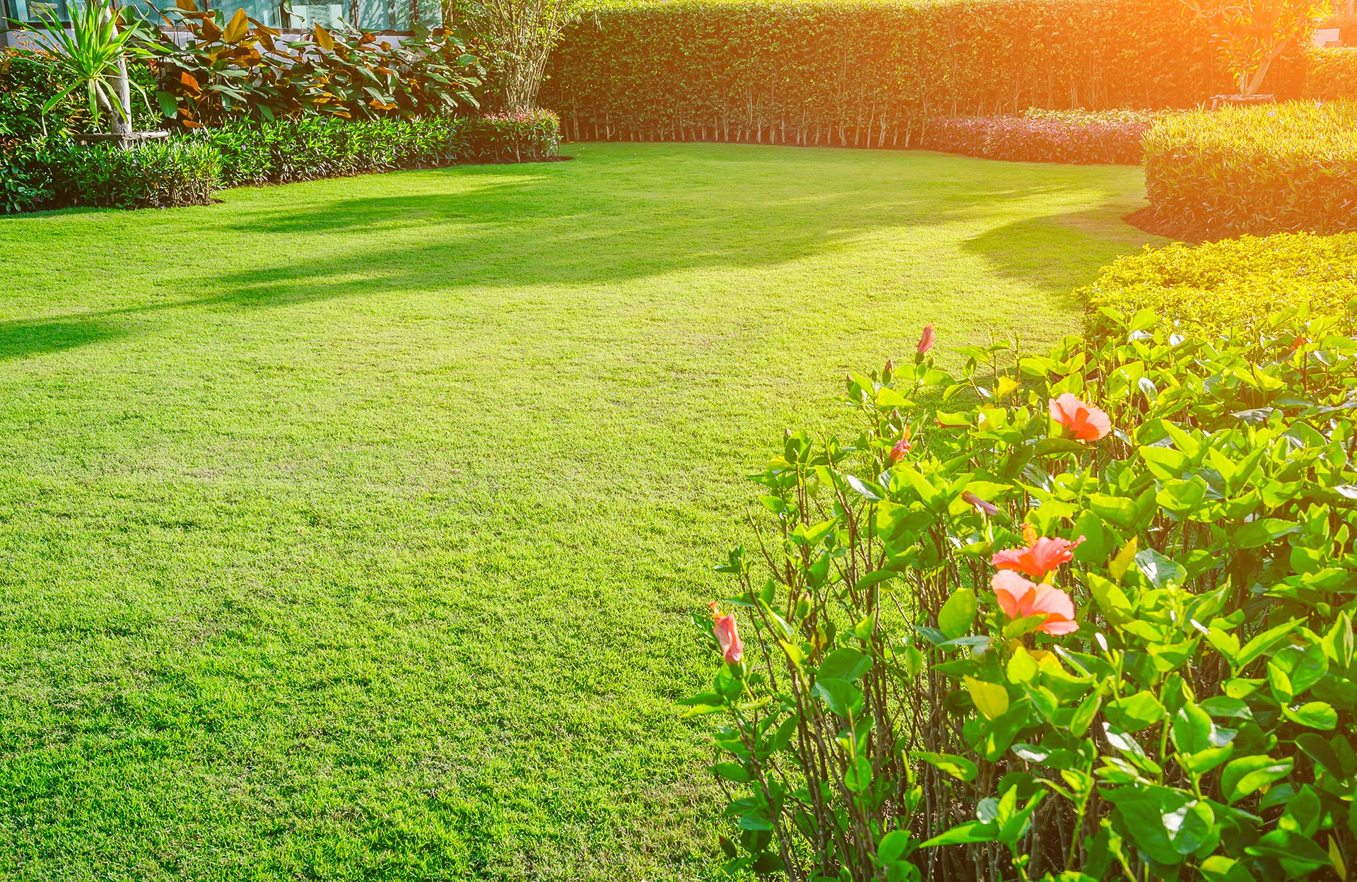 A large yard with healthy green grass